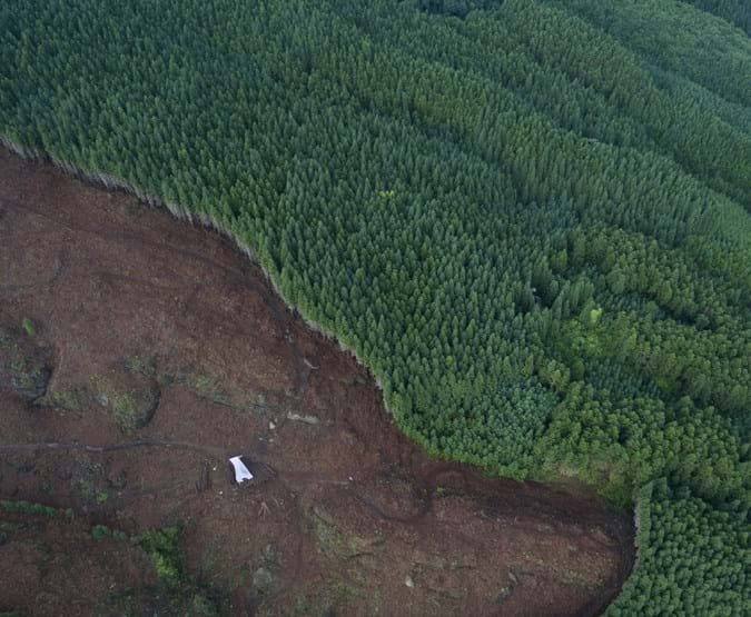 Aerial view of forest which has half disappeared from logging