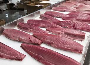 Cuts of fish at a fish counter