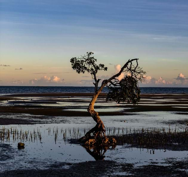 Tree in a flooded plain