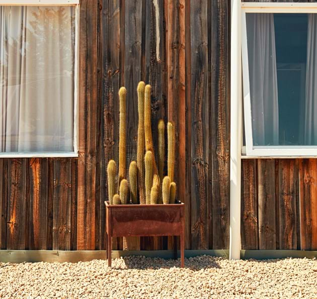 Cactus in front of building with solar panels on roof