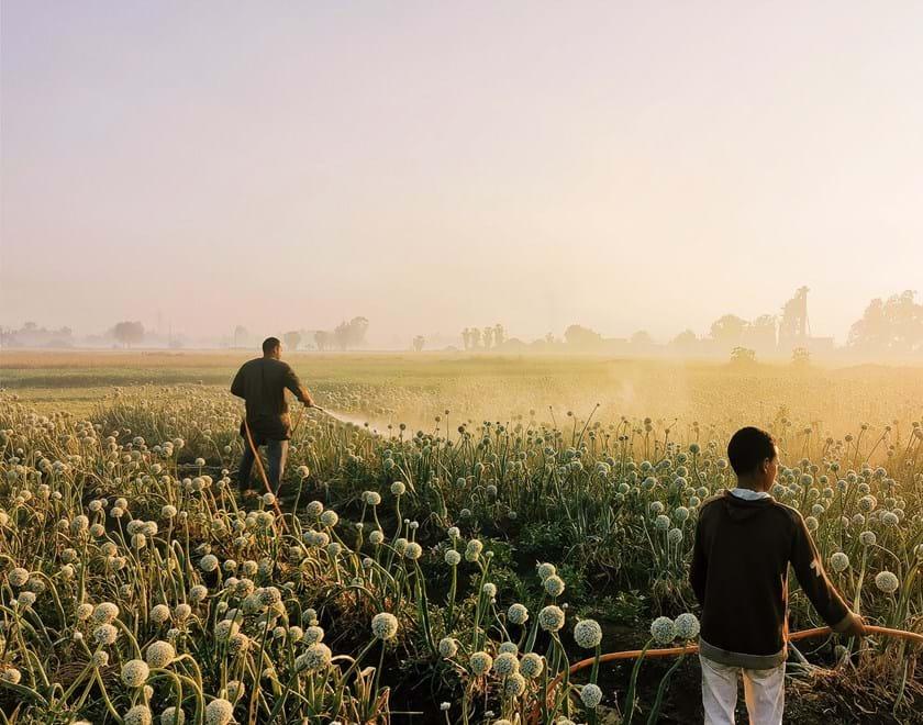 Farmers working field