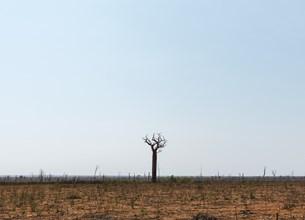 Dead tree in a field