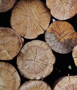 Ends of timber logs