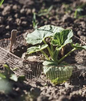 Plant growing in field