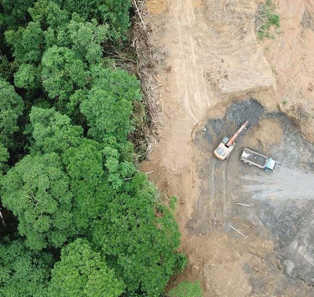 Forest destroyed by logging